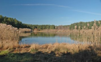 Sweetwater Farm – A gorgeous 60 acre tract featuring two ponds