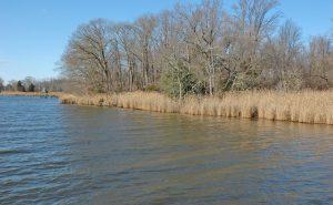 Premiere Sassafras River Lot